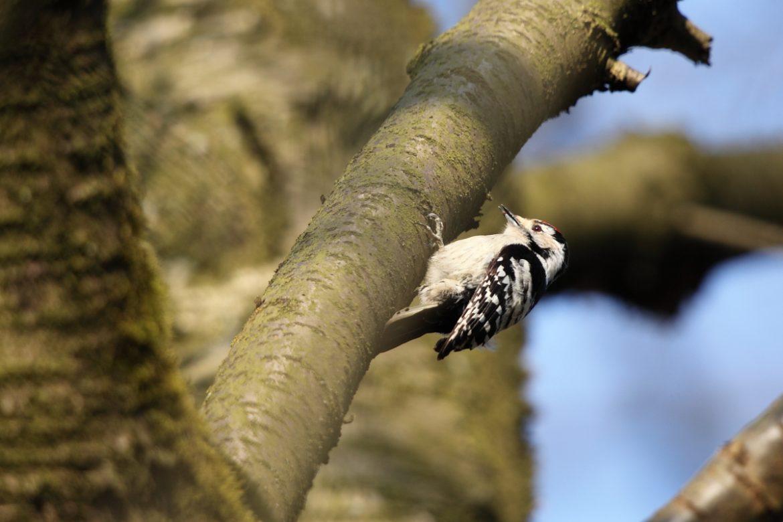 Marc Goedecke » NaturNah Lippe – Vögel im Kreisgebiet Lippe